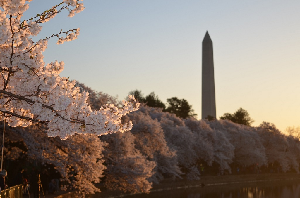 Apartments.com reports that Washington, D.C. is #7 on Most Loved Cities list